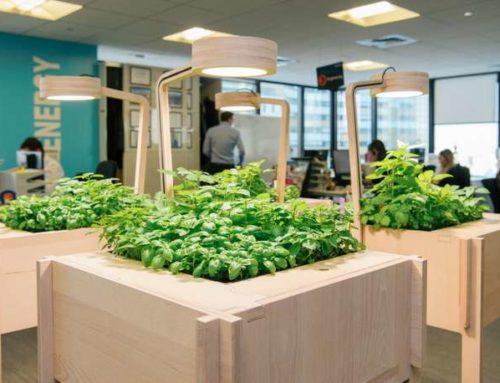 Potagers d'entreprise : se mettre au vert au bureau